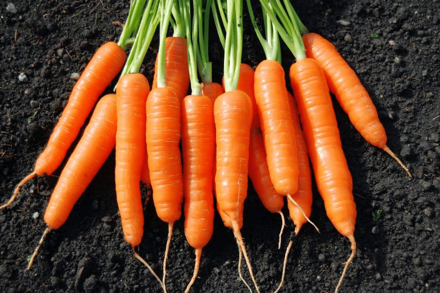 Jenis Sayuran Hidroponik Serta Kelebihan dan Kekurangannya