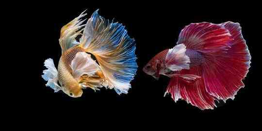 7 Jenis Ikan Hias Air Tawar yang Cantik dan Mudah Dipelihara | merdeka.com