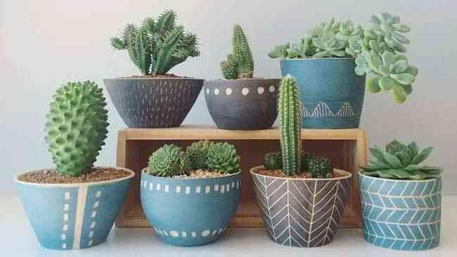 5 Tips Merawat Tanaman Kaktus dan Sukulen untuk Pemula, Klik Ini! • Klik Hijau